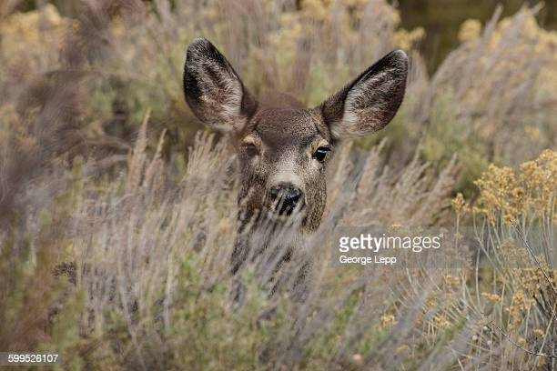 curious doe - biche photos et images de collection