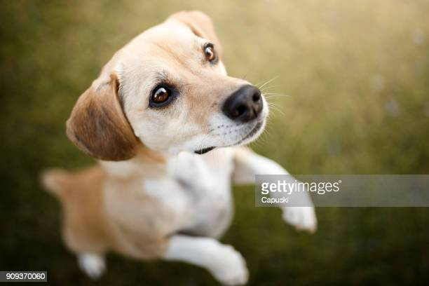 curious dog looking up - mongrel dog stock pictures, royalty-free photos & images