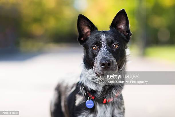 curious dog outdoors - collar stock pictures, royalty-free photos & images