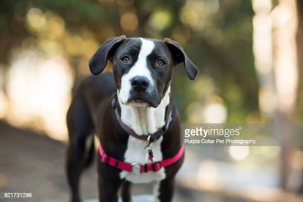 curious dog outdoors - mixed breed dog stock pictures, royalty-free photos & images