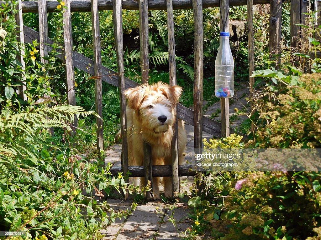 Curious dog : Stock Photo