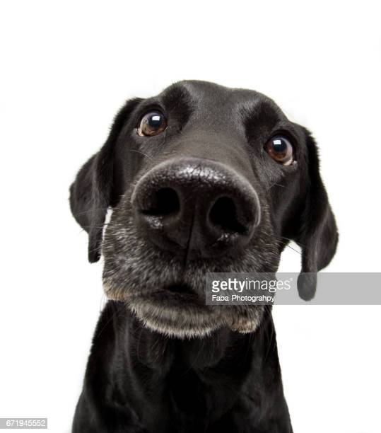 curious dog - nahaufnahme stock pictures, royalty-free photos & images