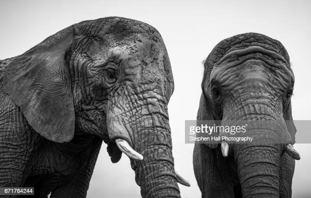 Curious Elephants