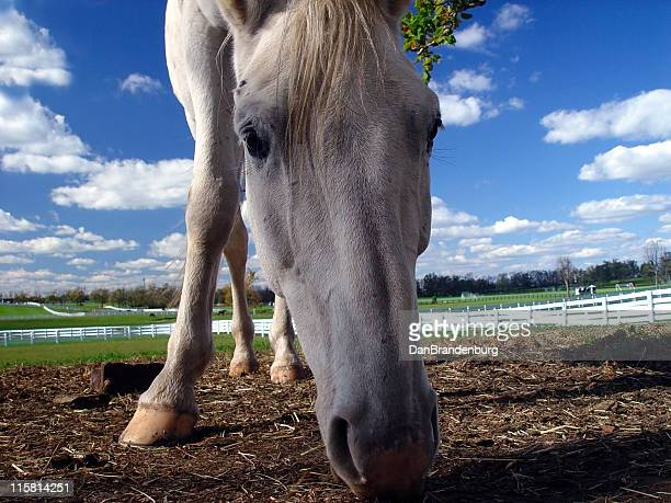 curious horse - ugly horses stock photos and pictures