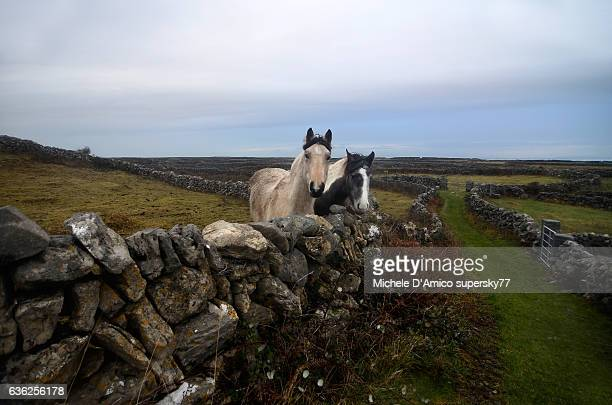 Curious horses in behind a stone fence.