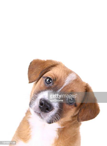 curious puppy looking - tilt stock pictures, royalty-free photos & images