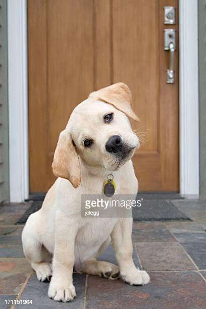 好奇心の強い子犬