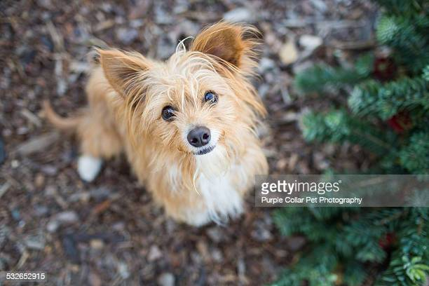 curious scruffy dog looking upward - mixed breed dog stock pictures, royalty-free photos & images