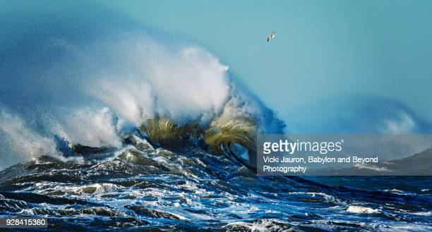 Curl of a Wave in High Seas