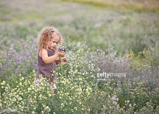 Curly Haired Little Girl Picking Wildflowers