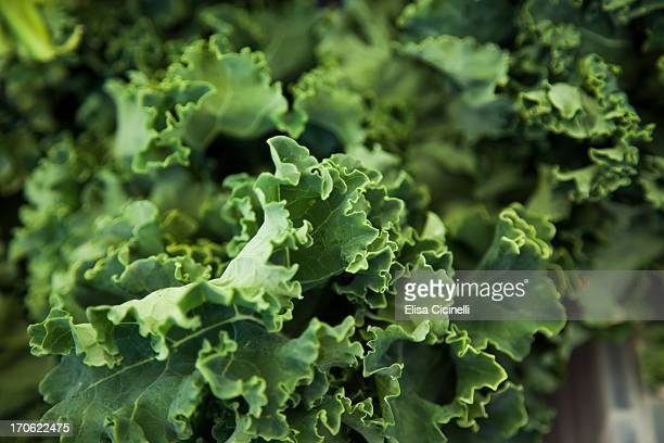 Curly leaved kale
