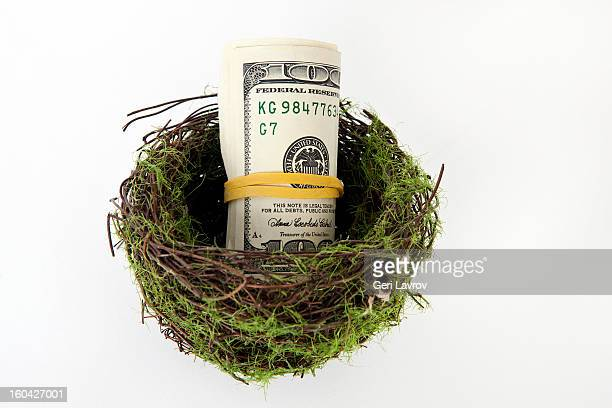 US currency in a nest
