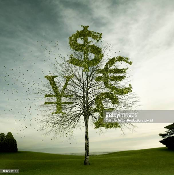 Currency symbols carved in tree in field