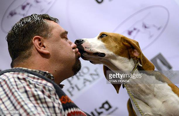 Curt Willis kisses one of his Treeing Walker Coonhounds during a press conference January 28 2013 by The Westminster Kennel Club to introduce two new...