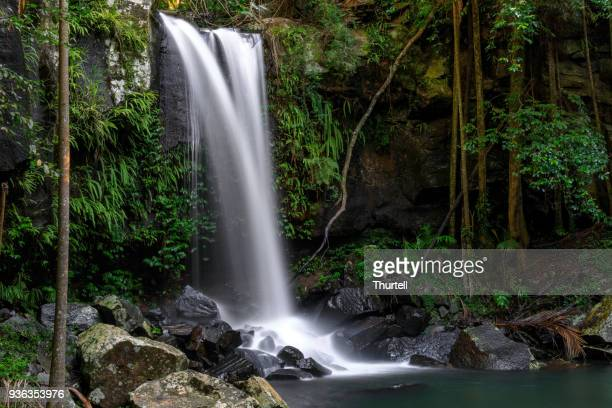 Curtis Falls - Tropical Rainforest Waterfall Australia