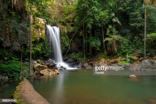 curtis falls - tropical rainforest waterfall australia - queensland foto e immagini stock