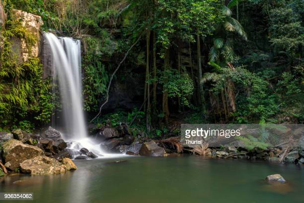 Curtis Falls - Tropical Rainforest Waterfall Australia