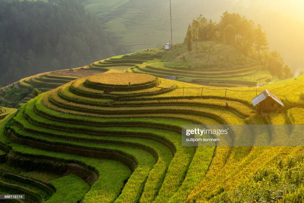 Curve beautiful landscape of rice field on the mountain of Vietnam. : Stock-Foto