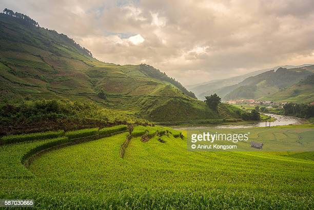 S curve of rice field and river at Vietnam