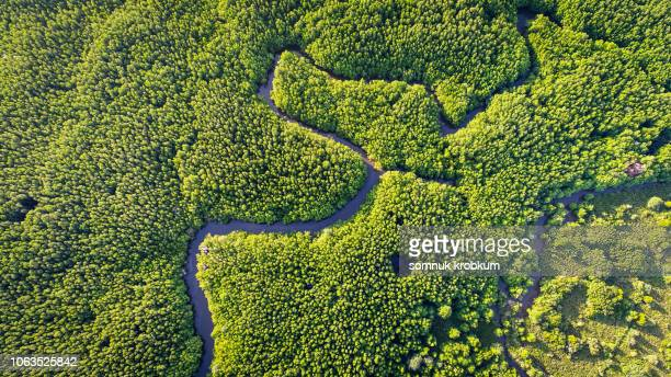 curve river in mangrove forest by drone - mangrove tree stock pictures, royalty-free photos & images
