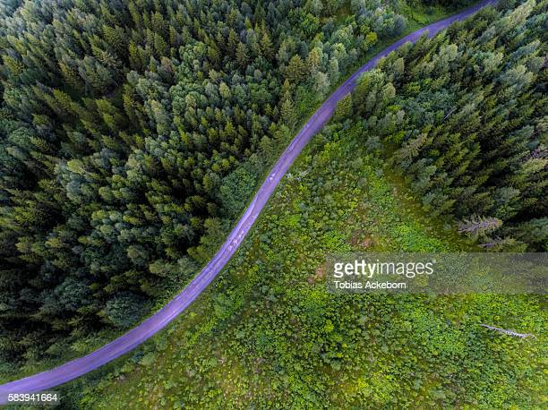 Curved forest road from above