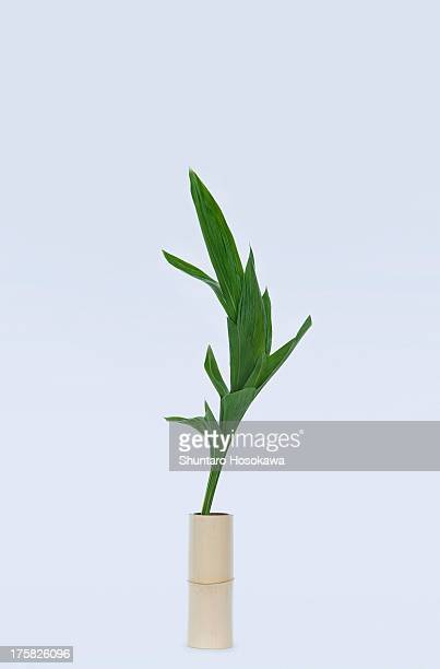 Curved green flower stem and leafs in vase
