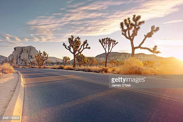 curved road with sunrise flare - joshua tree stock photos and pictures