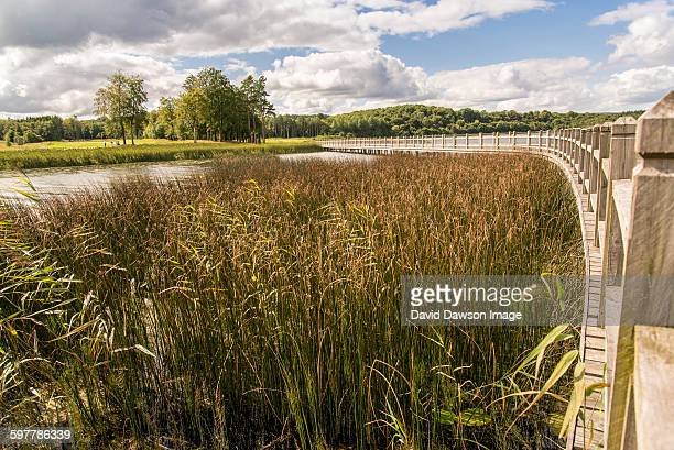 Curved walkway bordering reeds and water