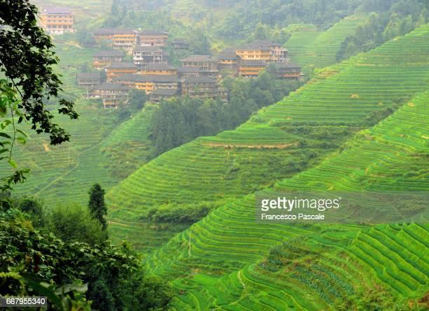 Curves in Longsheng rice terraces