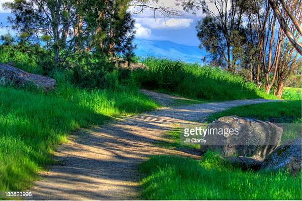 Curving path thru dappled light in spring
