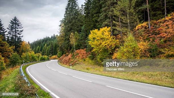 Curving Road in the Black Forest