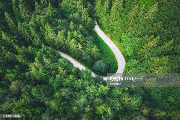 curvy road in forest - nature alphabet letters stock pictures, royalty-free photos & images