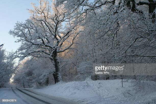 curvy snowy road - who stock pictures, royalty-free photos & images