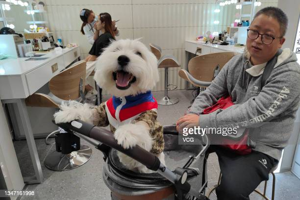 Customer and his dog are seen during a photo session at a photo studio on October 17, 2021 in Shanghai, China. The photo studio in Shanghai provides...