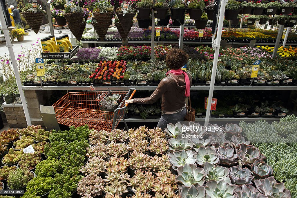 Surprising A Customer Browses Plants For Sale In The Outdoor Gardening Download Free Architecture Designs Jebrpmadebymaigaardcom