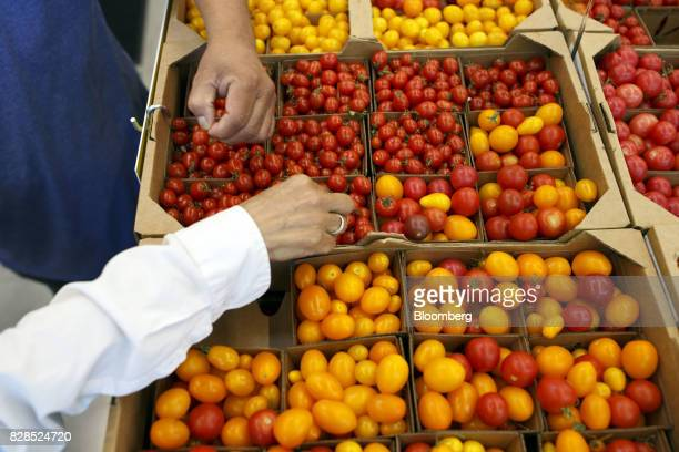 A customer browses tomatoes displayed for sale during the grand opening of a Whole Foods Market 365 location in Santa Monica California US on...