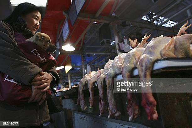 A customer buys chicken with her dog at a poultry market on February 27 2006 in Beijing China The Chinese Agriculture Minister Du Qinglin warned of a...