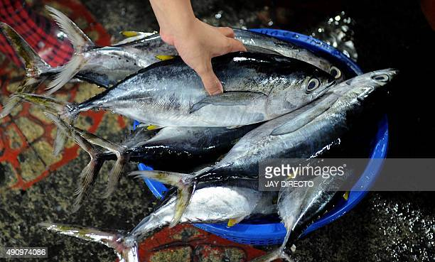 A customer buys yellowfin tuna at a market in Manila on October 2 2015 An international independent assessment in 2013 found stocks of bluefin tuna...