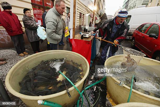 A customer directs a fishmonger while choosing his live Christmas carp at a stall on December 23 2009 in Prague Czech Republic Deepfried carp with...