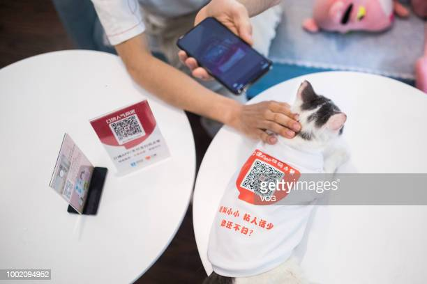 Customers scan QR codes on cats at a coffee bar on July 16 2018 in Hangzhou Zhejiang Province of China There are 15 cats in the coffee bar where...