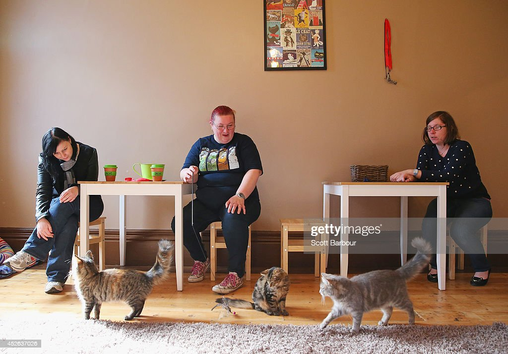 First Australian Cat Cafe Opens In Melbourne : News Photo