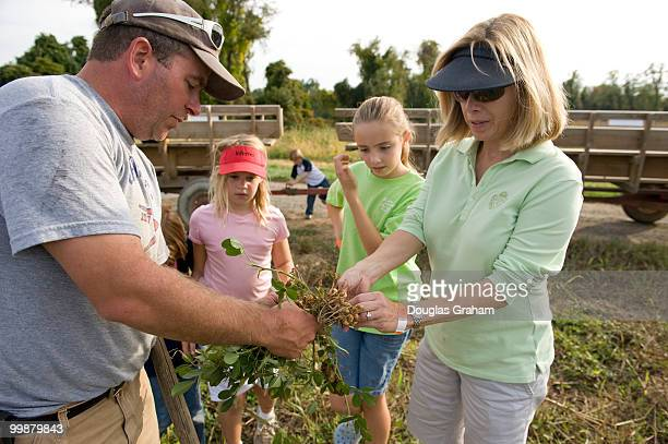 Customers get a tour of the peanut fields which are rare this far north at Great Country Farms in Loudoun County Virginia on October 9 2008