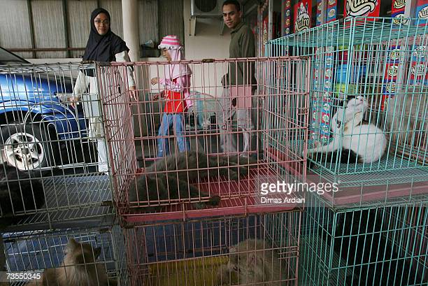 Customers walk past cages holding cats and dogs at a pet shop and pet beauty parlour March 12 2007 in Jakarta Indonesia Scientists warned pet owners...