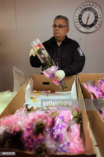 S Customs and Border Protection Agriculture Specialist Alvaro Tejedor inspects flowers for any foreign pests or diseases in the Arrow Cargo building...