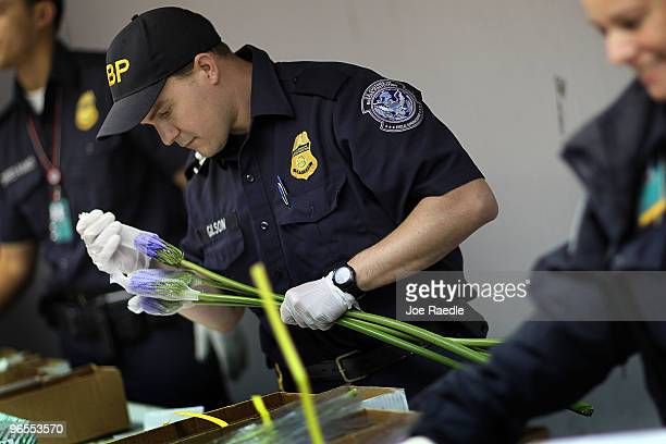 S Customs and Border Protection Agriculture Specialists Michael Gilson inspects flowers for any foreign pests or diseases in the Arrow Cargo building...