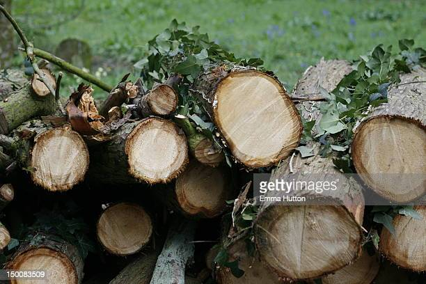 cut down trees - hutton stock photos and pictures