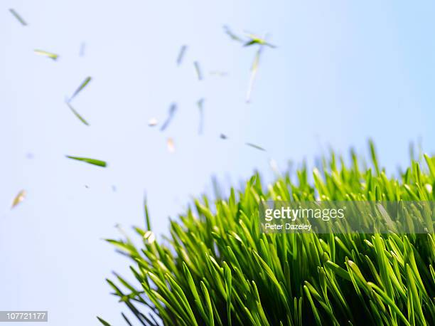 cut grass against sky - cutting stock pictures, royalty-free photos & images