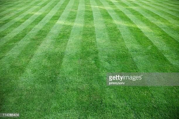 Cut Grass...