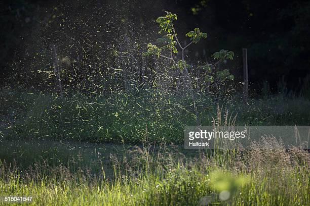 Cut grass spraying in lawn