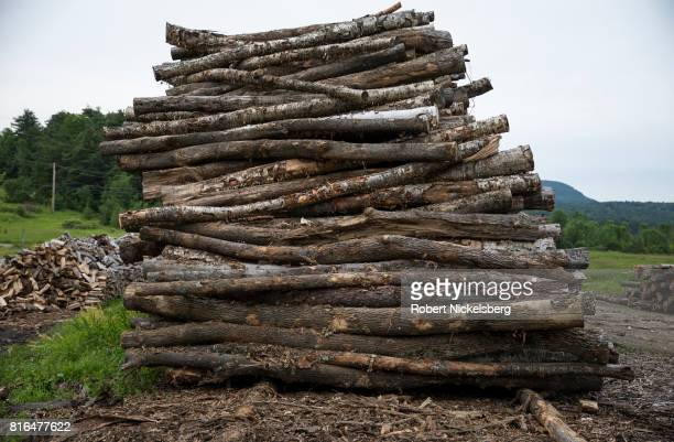 Cut hardwood logs lie stacked in a pile ready for cutting and splitting for firewood on land owned by Robert Marble June 29 2017 in Charlotte Vermont...